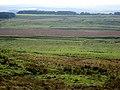 The Vallum near Allolee - geograph.org.uk - 999456.jpg