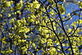 The colours of spring (7181245658).jpg