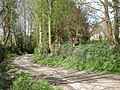 The drive up to the house - geograph.org.uk - 774793.jpg