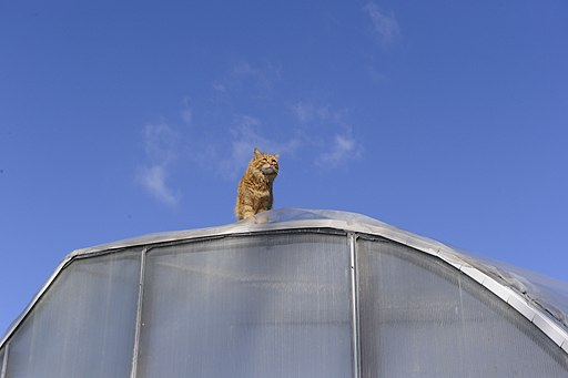cat on roof (3378868671)