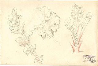 Three Studies of Plants