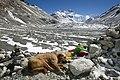 Tibet & Nepal (5162408905).jpg