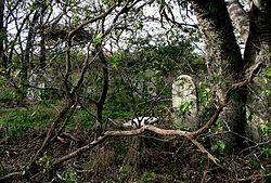 Tombstone Holland Island