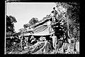 Trabalhadores Junto à Castanheira Derrubada para a Abertura do Traçado da Ferrovia Madeira-Mamoré - 1008, Acervo do Museu Paulista da USP.jpg