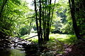 Trail-Seneca - West Virginia - ForestWander.jpg