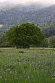 Trautenfels niederstuttern 57836 2014-05-14.JPG