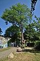 Tree Dadlerpark 01.jpg