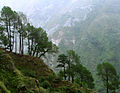 Tree line towards Triund peak, above McLeod Ganj.jpg