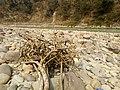 Trishuli river side.jpg