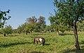 Tula YasnayaPolyana asv2019-09 img04 orchard.jpg