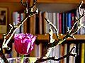 Tulpen Holz.jpg