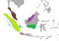 Tupaia glis Species complex.png