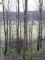 Tweedside woods - geograph.org.uk - 288663.jpg
