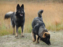 Image Result For Best Dogs To