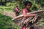USAID Measuring Impact Conservation Enterprise Retrospective (Nepal; National Trust for Nature Conservation) (39403487645).jpg