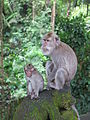 Ubud Monkey Forest 5.JPG