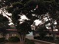 Uma Pipa na Árvore - panoramio.jpg