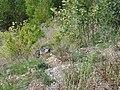 Upper Tarn Vista N106 Ispagnac 6307.JPG