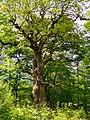Urwaldbaum.jpg