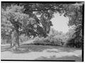VIEW OF REDOUBT ON YORKTOWN BATTLEFIELD. - Yorktown Battlefield Tour Roads, Yorktown, York County, VA HAER VA,100-YORK.V,2-5.tif