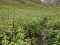 Valley of flowers National Park 05.JPG