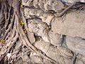 Vegetation growing within adobe rocks.jpg