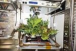 Veggie plants.jpg