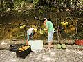 Venda de frutas na estrada de Tamandaré, PE.jpg