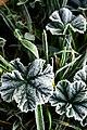 Verde Y Blanco (57502512).jpeg