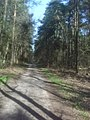 Verden- Wald bei Scharnhorst - geo.hlipp.de - 9071.jpg