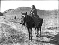View of a Navajo Indian maiden on a pony, ca.1901 (CHS-3244).jpg