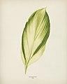 Vintage illustrations by Benjamin Fawcett for Shirley Hibberd digitally enhanced by rawpixel 11.jpg