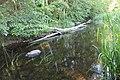 Vitrupes ielejas dabas liegums (4).jpg