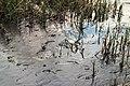 Wak in ijs door de onderstroom. Locatie, Natuurterrein De Famberhorst 01.jpg
