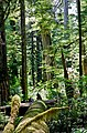Walbran Valley Old Growth.jpg