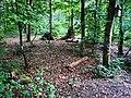 Waldkindergarten Kinderwald in Tauberbischofsheim 13.jpg