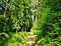 Wanderweg - panoramio (24).jpg