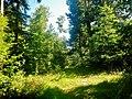 Wanderweg bei Pfalzgrafenweiler - panoramio.jpg