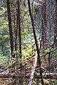 Wapta Falls Trail IMG 4937.JPG