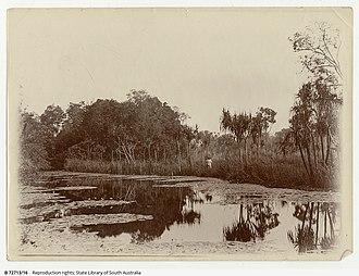 Rum Jungle, Northern Territory - Water scene on Poett's old coffee plantation, Rum Jungle, Northern Territory