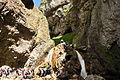 Waterfall in Gordale Scar (6069).jpg