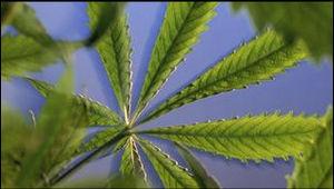 When was marijuana first illegal in Australia?