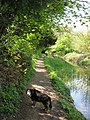Wendover Arm, The towpath approaches Harelane Bridge - geograph.org.uk - 1311786.jpg