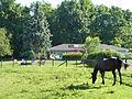 Whistlewood Farm, Rhinebeck, New York P1150914.JPG