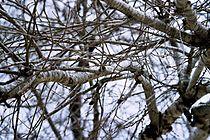 White Branches.jpg