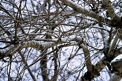 meaning of branch