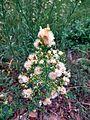 White flower1.jpg