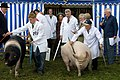 Who let the pigs out? (2862086631).jpg