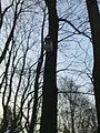 Wilanów - park pałacowy - 28.jpg