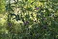 Wild flowers in a forest near Olgino 2020-09-13-6.jpg
